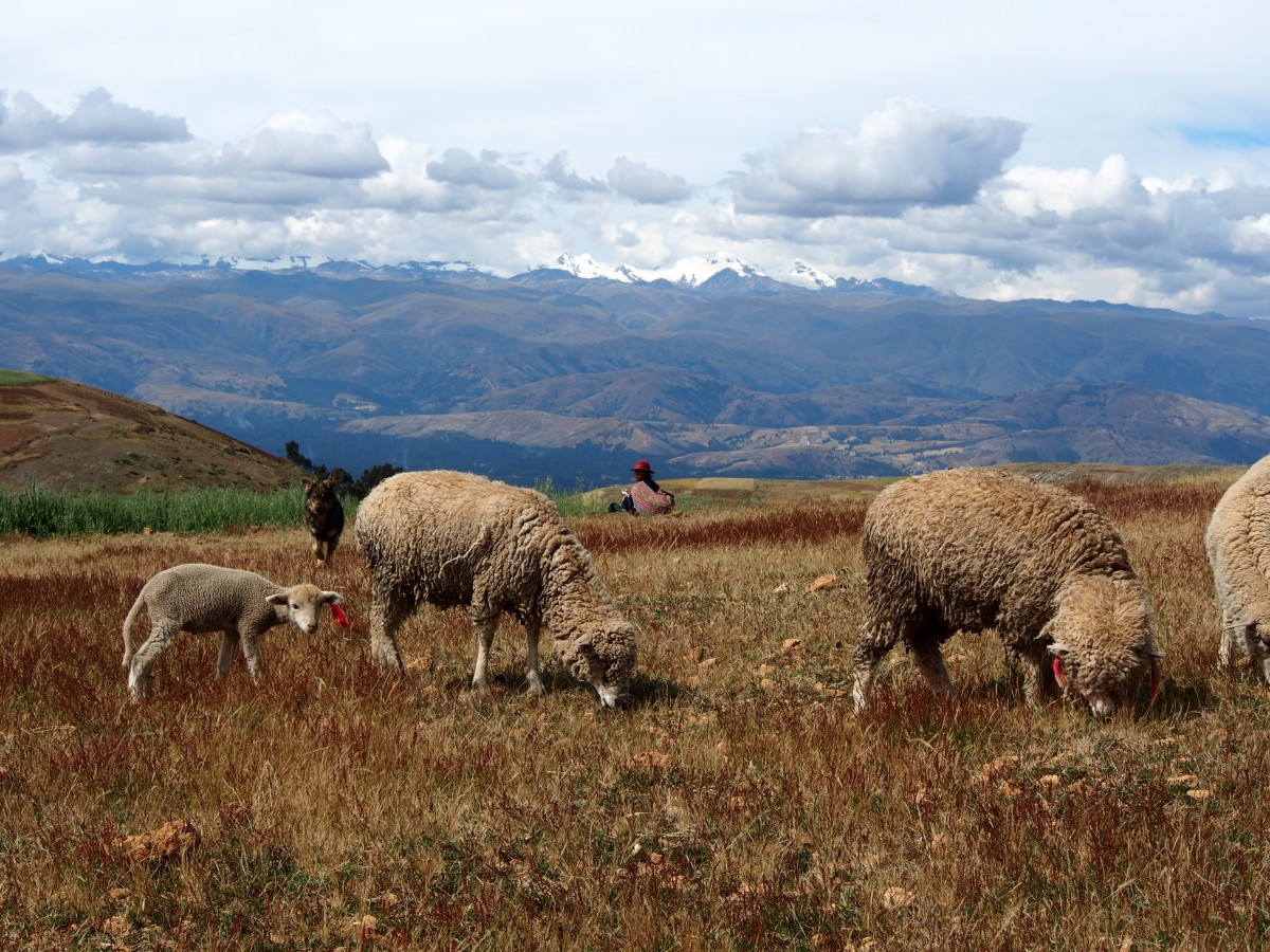 In the region of Cruz Pampa, the communities devote themselves to their fields and animals.
