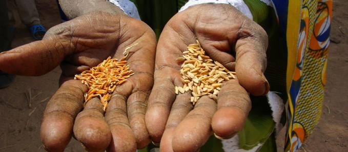 800 millions de personnes souffrent de la faim dans le monde.